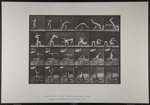 Hand-spring over man's back. [M. 364]; Da Capo Press; Muybridge, Eadweard; 1887; 1972:0288:0097