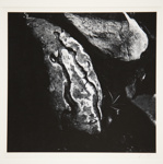 [Untitled, abstraction of a natural form]; Wells, Alice; 1964; 1972:0287:0071