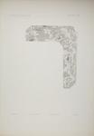 Plate XXV; Audsley, George; 1883; 1978:0125:0026