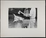 [Man with axe chopping a steer's head]; Christian, John; 1969; 1982:0075:0001