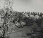 Untitled [Blossoming tree]; Keiper, Elisabeth; ca. 1940s; 1978:0117:0011