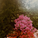 Untitled [Trumpet flowers]; Klett, Mark; 1975; 2011:0011:0005