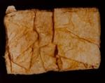 II. JELLY (Physalia physalis); Frampton, Hollis; 1982; 1986:0018:0004