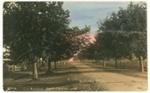 Postcard, The Avenue Port Macquarie; H G Rickerby; c1914; P4055