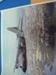 Photograph RAAF Hercules; TAM2012.517