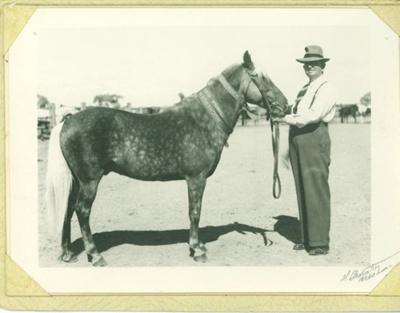 Felix Johnstone with General MacArthur (horse), 1954; Art Photo Service, Brisbane; 1954; 2012-224