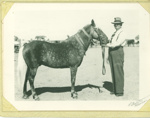 Felix Johnstone with General MacArthur (horse), 1954; Art Photo Service, Brisbane; 1954; 2012-224