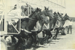 Horses in stalls at Diggers race meeting, Hughenden 1967; Unidentified; 1967; 2012-54