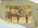 Nevada (horse) with unidentified man at the Hughenden Show, 1907; Federal Studio, TOWNSVILLE; 1907; 2012-236