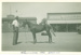 Wilfred Hall with show horse on Brodie Street, Hughenden, 1952; Unidentified; 1952; 2012-231
