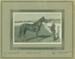 Drunotis (horse) with Ben Trembath, Hughenden 1930s; Unidentified; 1930s; 2012-222