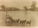 Cobb & Co coach crossing Flinders River at Gillespie Crossing, Hughenden ca.1890; Unidentified; 2012-135
