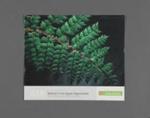 Calendar, Baldwin's Four Square Supermarket, Mataura; Tablet Colour Print; 2006; MT2012.113.4
