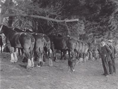 Photograph [Waiarikiki farm clearing sale, 1914]; unknown photographer; 1914; MT2011.185.366