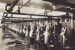 Photograph [Mataura Freezing workers on slaughter board]; Hyne, W. Crown Studio (Gore); 1925; MT2011.185.3