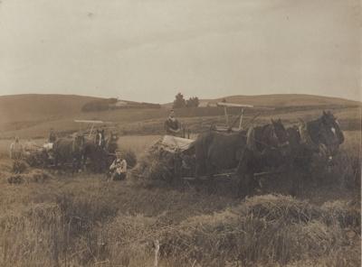 Photograph [Farming, men binding a paddock]; Mora Studio, The (Gore); [?]; MT2011.185.375