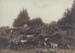 Photograph [Waiarikiki farm clearing sale, 1914]; unknown photographer; 1914; MT2013.23.5