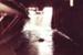 Photograph [Water Race, Mataura Freezing Works]; Green,Trevor; 26.08.1982; MT2013.3.66
