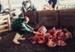 Photograph [Strike Relief, Mataura Freezing Works]; Green,Trevor; 30.04.1990; MT2013.6.44