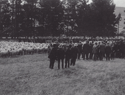 Photograph [Waiarikiki farm clearing sale, 1914]; unknown photographer; 1914; MT2011.185.367