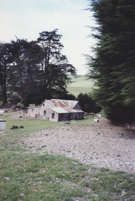 A colour photograph of a woolshed, in a paddock on...