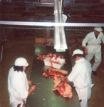 Photograph [Beef Boning Table, Mataura Freezing Works]; Green,Trevor; 1978; MT2013.2.13