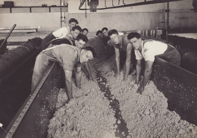 Photograph, 9 of 19, Mataura Dairy Factory Album [Cheese Making, Turning Curds]; unknown photographer; 1927; MT2012.139.9