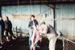 Photograph [Strike Relief, Mataura Freezing Works]; Green,Trevor; 30.04.1990; MT2013.6.43
