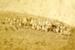 Photograph [Mataura School] ; unknown photographer; 1890-1900; MT2017.14.8