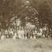 Photograph, [Linton Wedding,Tuturau, 1903]; Gerstenkorn, Karl Andreas (Invercargill); 30.12.1903; MT2011.185.442