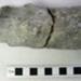 Plesiosaur jaw bone ; Plesiosaur; Locality not recorded ; ABGCH: 1980.191.25