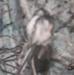 Stuffed bird, Long-tailed Tit; LDQEH.2016.30