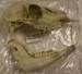 Skull Fallow deer; LDQEH.2007.334.1 & .2
