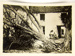 Tree Felled by Shell at Pontavert (Oise); Unknown; early 20th century ; 2015.00.349