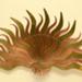 Copper and Brass Brisé Fan, Mount & Plastic Box; Eva Veldhoun; 1989; LDFAN1991.62.1, LDFAN1991.62.2 & LDFAN1991.62.3