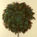 Fixed Feather Fans (Pair); 1970-1980; LDFAN1993.21.1 & LDFAN1993.21.2