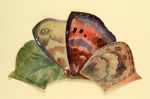 Fan Leaf ; LDFAN1986.38