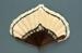 Feather Fan; 1920s; LDFAN1998.49