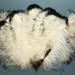 Feather Fan; c. 1920s; LDFAN1992.42