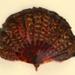Feather Fan & Box; Duvelleroy; c. 1920s; LDFAN1989.13