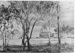 Photograph of Redlands Showground at Cleveland, Queensland; 1952; P5