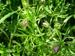 Hollocombe's wild flowers : Cut Leaved Cranes- Bill; 2006-2007; 5-867