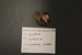 Cobaltite; Mineral--Sulphide; GE 2.2a.5 / 1 - 2014