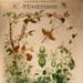 Mimicry, Mimétisme; Rémy Perrier and Casimir Cépède; 1912; WC-PCZ3/1-2013