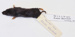 Blarina  brevicauda Northern short-tailed shrew; Insectivora; MA6.2.1/8-2011