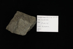 Pyrite; Mineral--Sulphide; GE 2.2a.3 / 2 - 2014