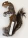 Sciurus  carolinensis Eastern gray squirrel; Rodentia; MA13.3.1/8-2011