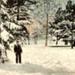 Postcard: Snow Scene, Ballarat Gardens 1905; 83.01175