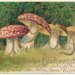 Postcard: Mushrooms (Pink); 83.0582