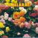 View Folder, Historical Ballarat Victoria; Rose Stereograph Co.; 2017.0893